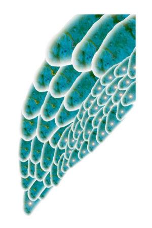 """""""(Lungen) Flügel rechts"""" – Brigitte Hadlich   Digital print, Auflage 10, 1. Ausdruck 7/2002   Maße: 45 x 27 cm   Mindestgebot: 70 Euro   mit einfachem Passepartout   Website: www.hadlich-art.de   Kontakt: big@hadlich-art.de"""